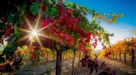 VineyardSeriesCredit
